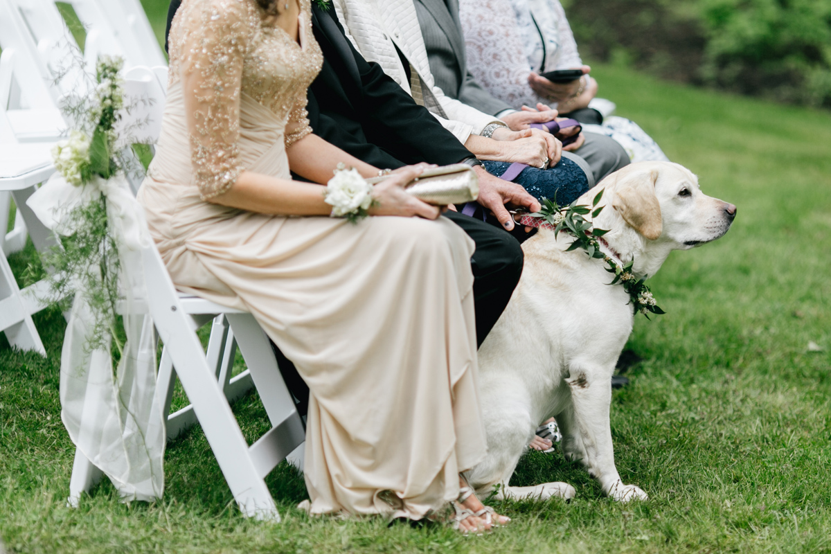 dog watching wedding ceremony at Antony Wayne House